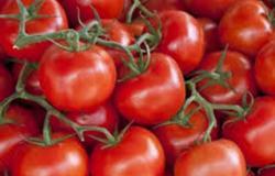 الزراعة: أسعار الطماطم مرضية للمستهلك والمزارع