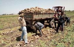 «التموين»: مصر استطاعت أن تصل إلى شبه اكتفاء ذاتي من السكر