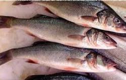 ضبط 5 أطنان كبدة مجمدة وأسماك ماكريل منتهية الصلاحية