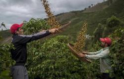 رحلة لدمج النكهات.. مزارع القهوة البرازيلية في انتظار التجار السعوديين