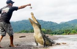 خرج حياً.. شاهد ما فعله مرشد سياحي مع تمساح عملاق