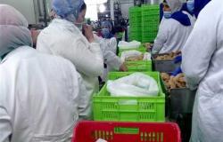 غرفة الدواجن تكشف سبب ارتفاع أسعار اللحوم البيضاء