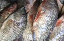 البلطي بـ18.5 جنيه .. سعر السمك والجمبري في مصر السبت 18 سبتمبر 2021