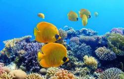 «الغوص» تحذر من من التعامل مع ٥٤ كيان غير مرخص بالبحر الأحمر