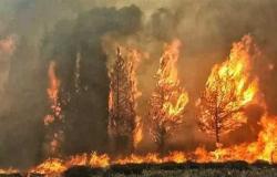 سوريا تعدم 24 شخصاً أدينوا بإشعال حرائق غابات