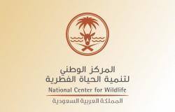 """""""السعودية الخضراء"""".. """"الفطرية"""": 30% من مساحة المملكة ستكون مناطق محمية"""