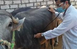 قافلة بيطرية تعالج 330 رأسًا من الحيوانات بقرية «الشيخ مكرم» بسوهاج