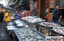 استقرار أسعار الأسماك في سوق العبور .. والبلطي بــ 24 جنيهًا