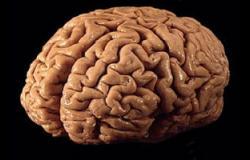 قدح من الكاكاو الساخن يحسن قوة وظائف المخ لدى كبار السن
