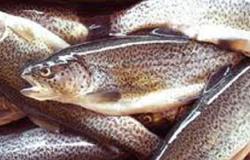 الأسماك والفواكه والمكسرات تقوى الحيوانات المنوية وترفع فرص الإنجاب