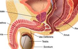 خبراء ألمان لا يرون جدوى من إجراء الأشعة للتعرف المبكر على سرطان البروستاتا