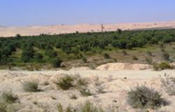 حصر كامل للزراعات المتأثرة بأحداث سيناء بالعريش ورفح