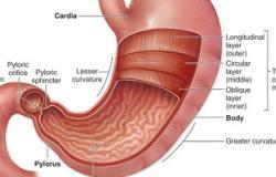 تكميم المعدة يعمل على انتقاص هرمون الجوع بنسبة أكثر من 75%