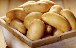 ارتفاع أسعار البطاطس فى روسيا والاستعداد لشراء كميات كبيرة من مصر