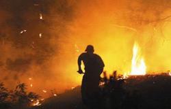 إخماد حريق بأشجار بجوار كوبرى خشب ببولاق الدكرور