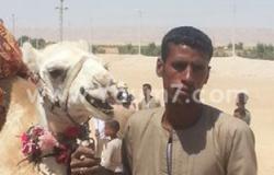 الحجر البيطرى بأسوان يستقبل 1850 رأس من الإبل الواردة من السودان